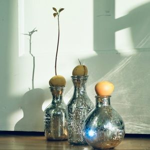 Antiqued Mirror Vase - Grow Avocado from Seed!